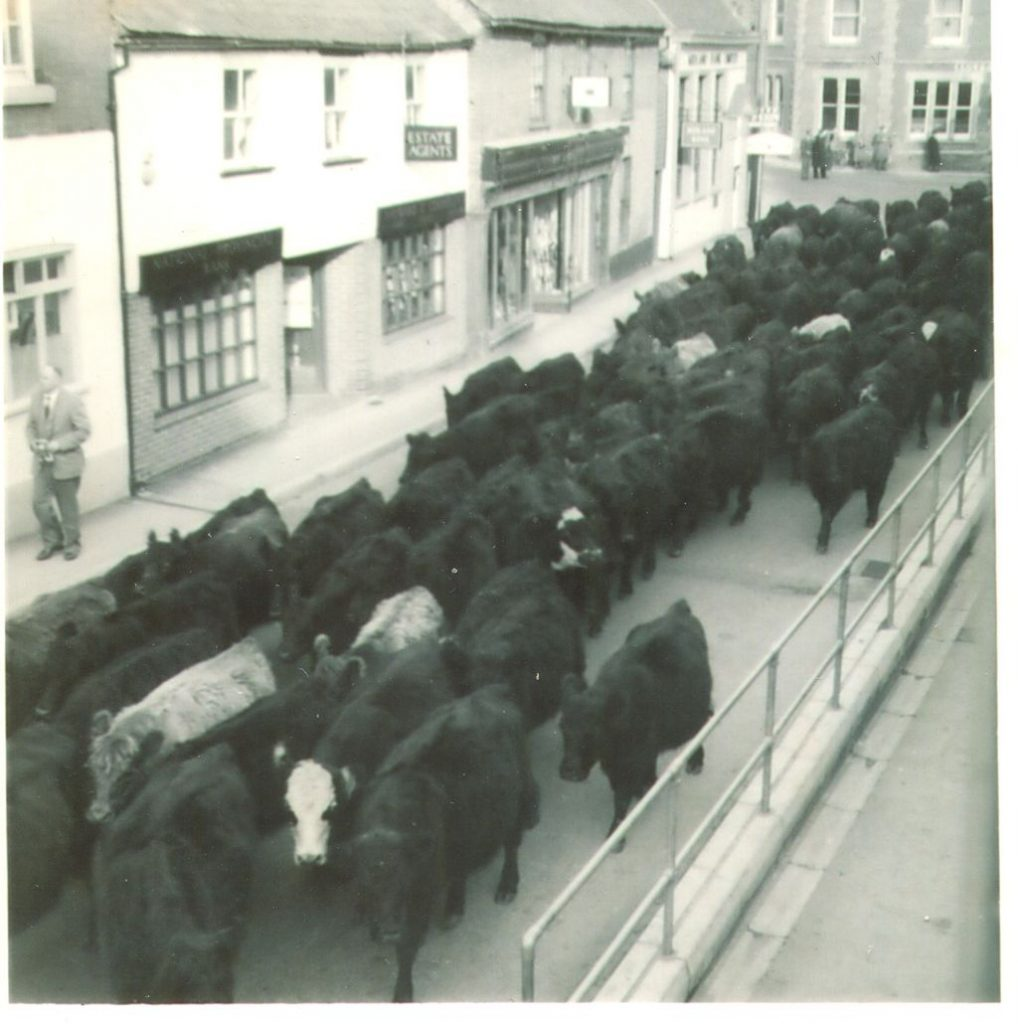 Galloways in Fordingbridge